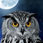 Good news for night owl jobseekers